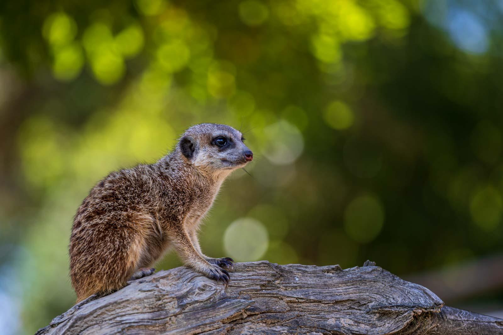 Animal, Deutschland, Europa, Europe, Germany, Herborn, Hessen, Hessia, Location, Ort, Sommer, Summer, Tier, Tiergarten, Zoo