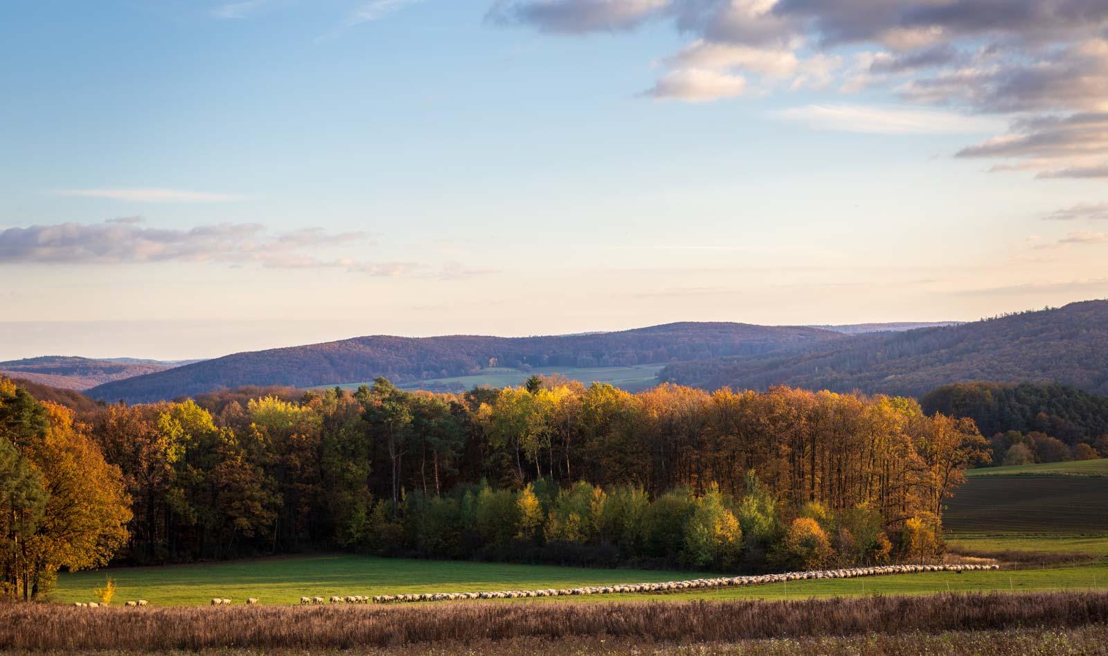 Deutschland, Forrest, Gladenbach, Herbst, Hessen, Hinterland, Landscape, Landschaft, Natur, Nature, Wald, autumn