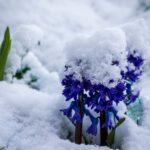 Blumen, Flowers, Garten, Natur, Nature