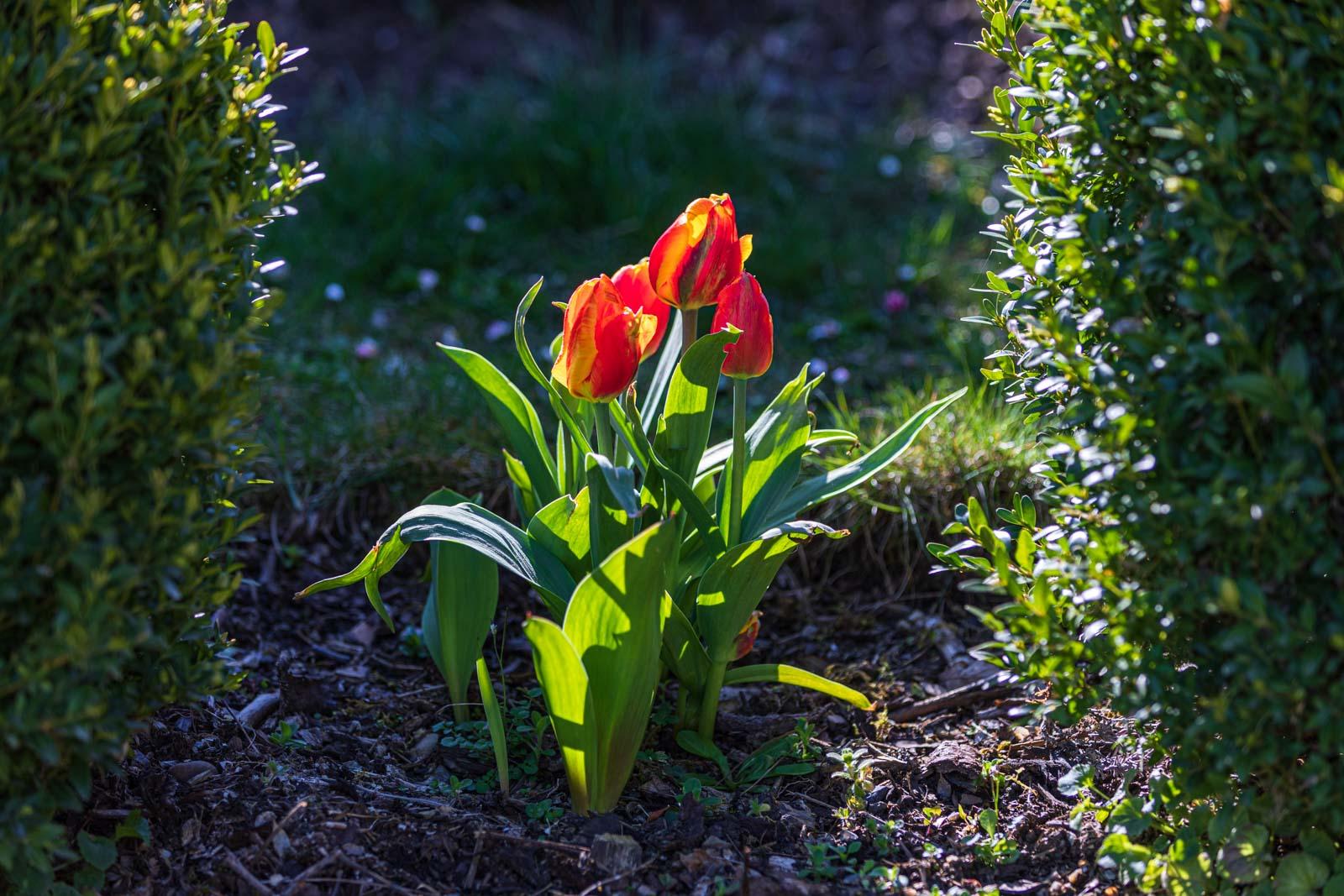 Blumen, Flowers, Frühling, Garten, Natur, Nature, Spring